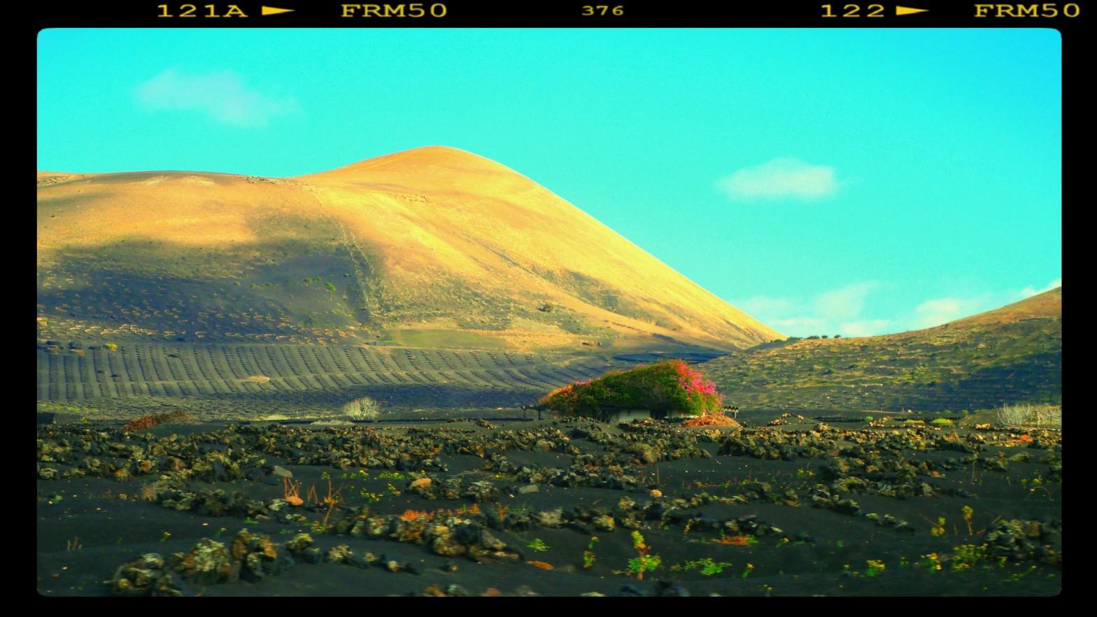 El paisaje de La Geria, el gran activo enoturístico de Lanzarote