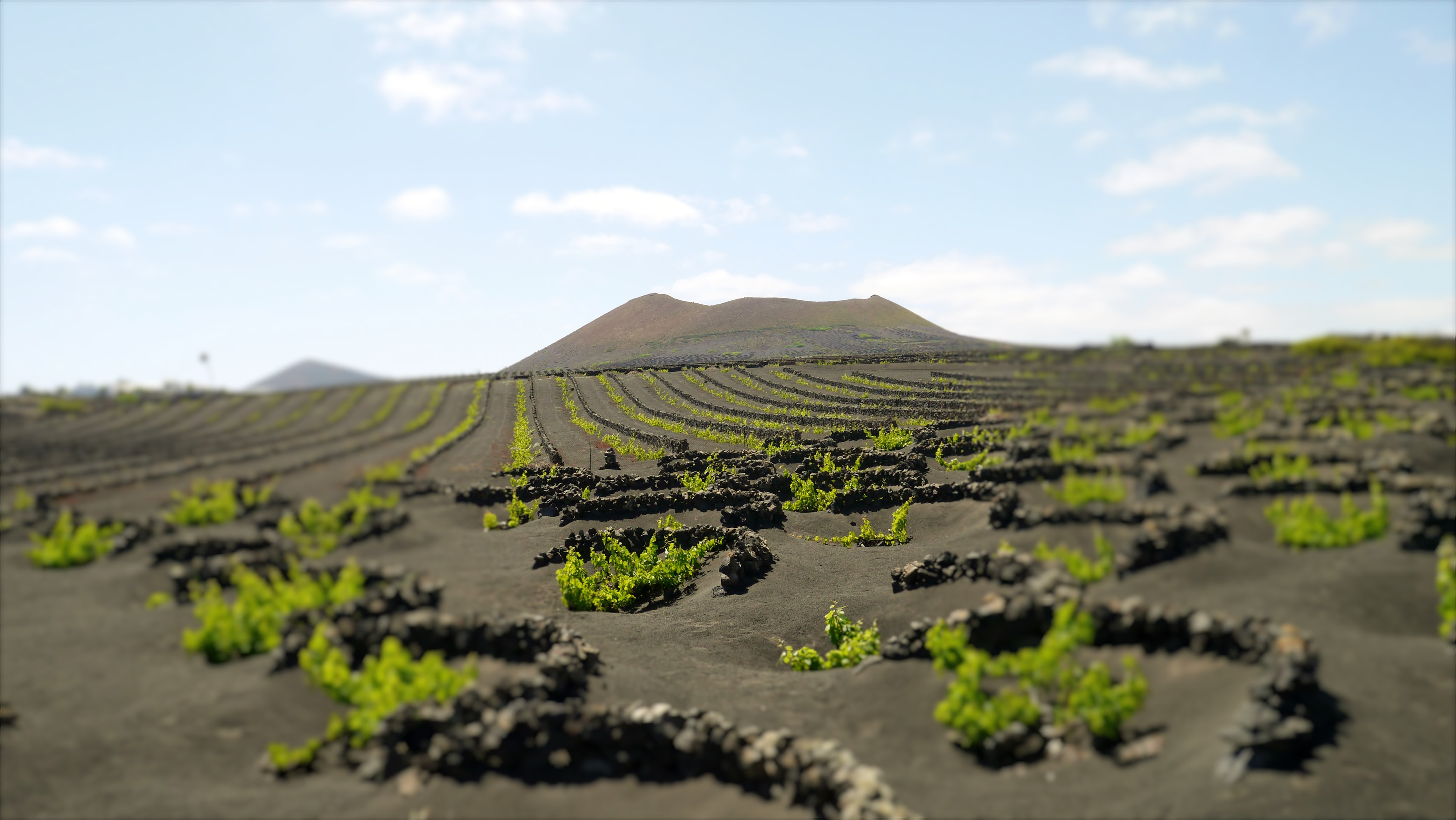 Hoyo y zanja, tipos de cultivo del vino en Lanzarote